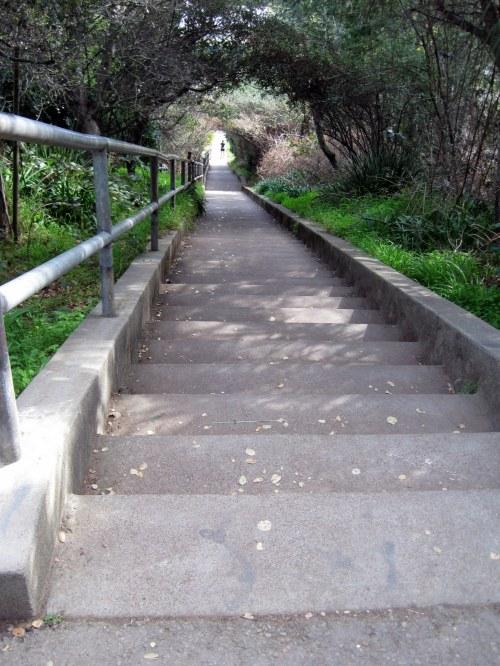 Larkspur Stairs