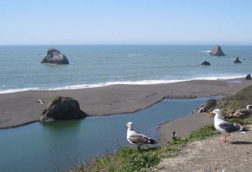 Mouth of Russian River + Sealls