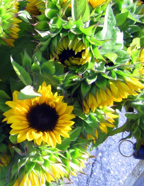 Farmer's Market Sunflowers