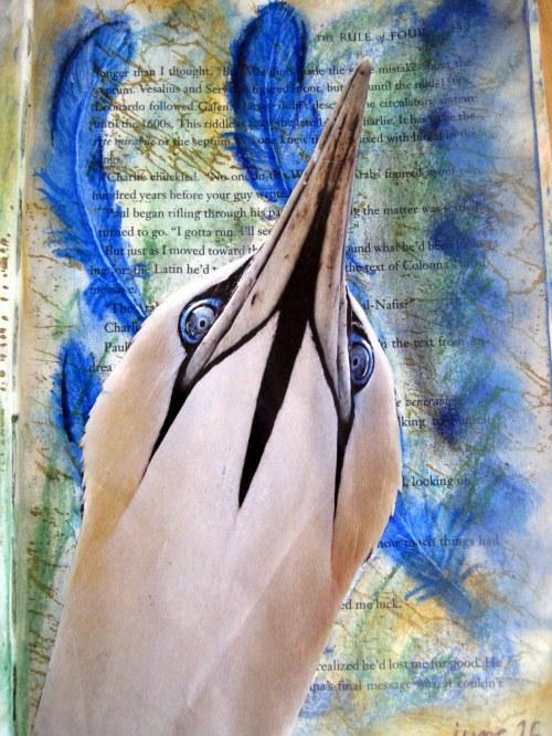 white bird, blue eyes