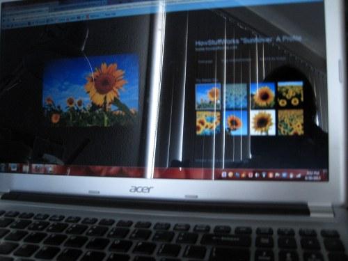 Sunflowers Online