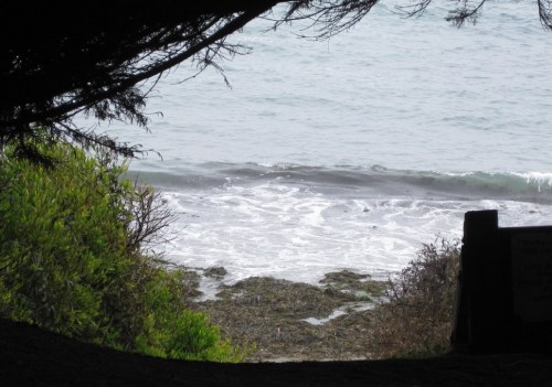 Beach through the Trees