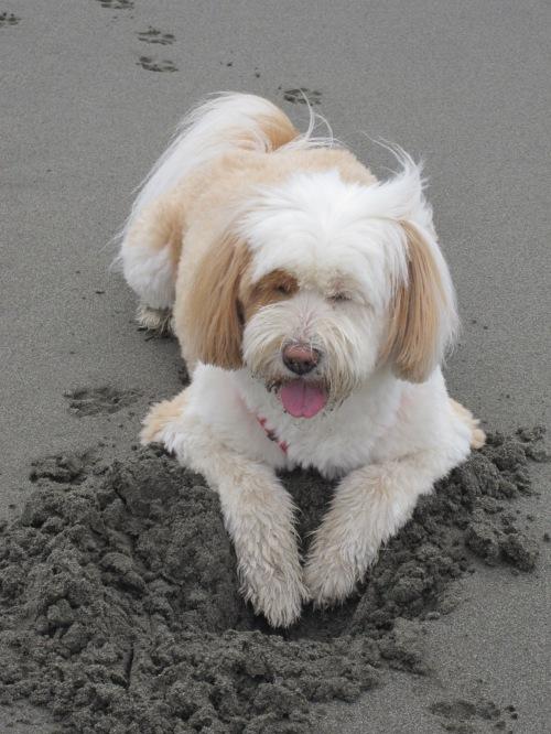 Silly Doggie