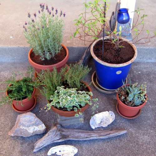 Plant with driftwood and shells