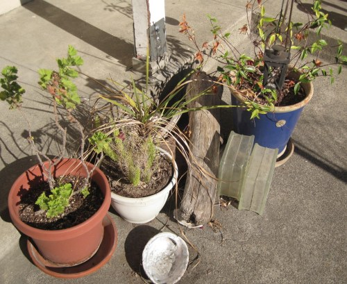 Neglected Plants