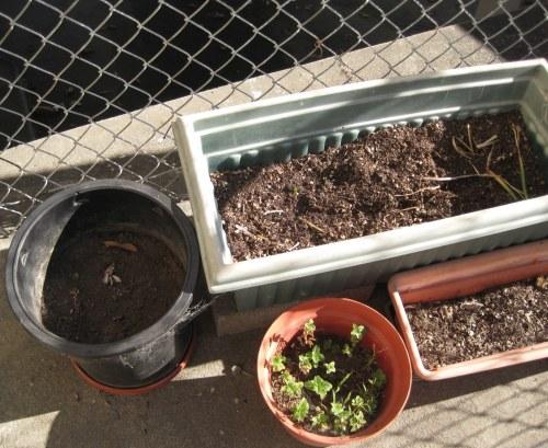 Pots of dirt