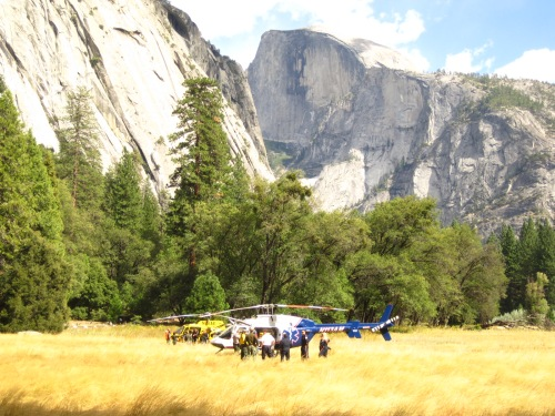 Helicoptors in Meadow