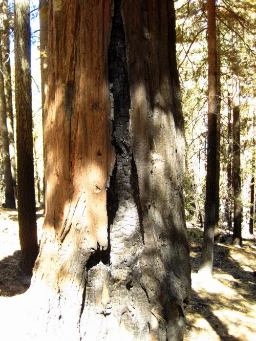 Burned Trunk
