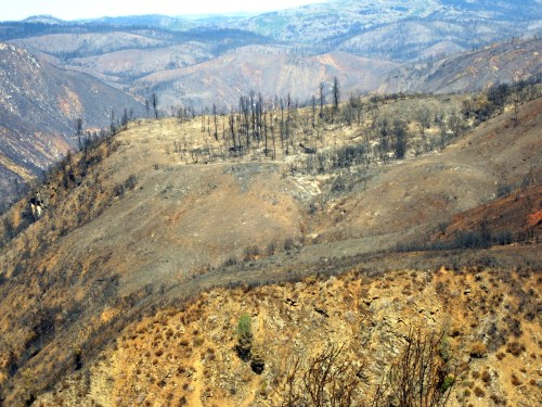 Charred Trees, Yellow Hillside