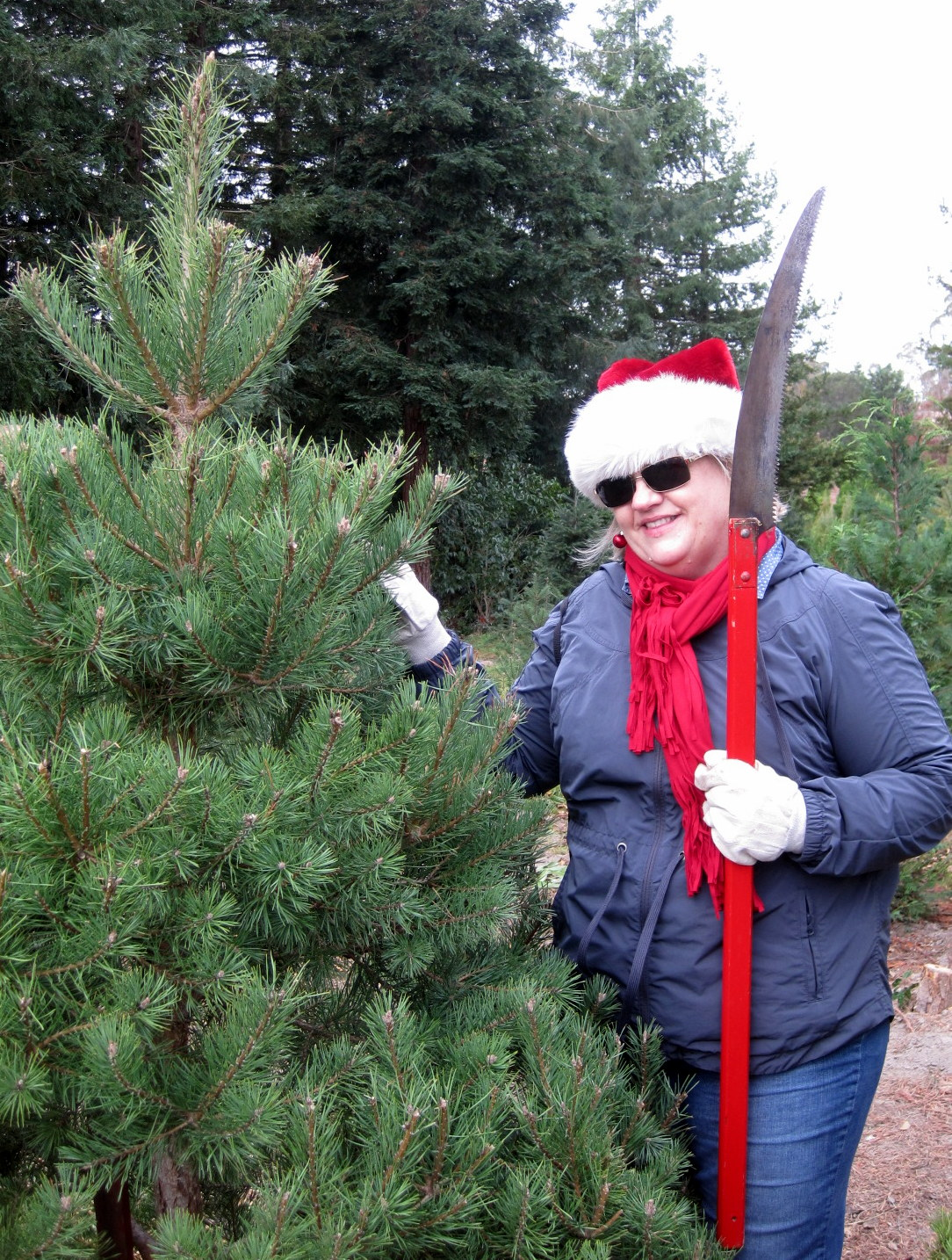 christmas tree farm petaluma