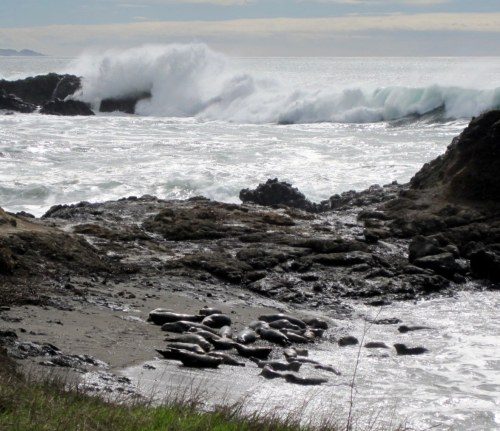 Seals and high surf
