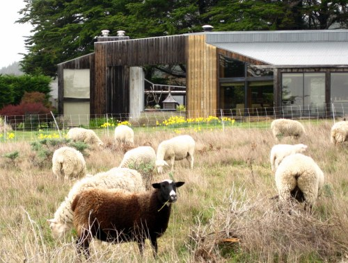 Sea Ranch House with Sheep