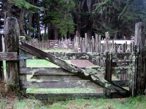Sheep pen gate
