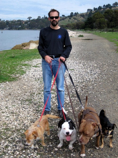 All 4 dogs + Rem