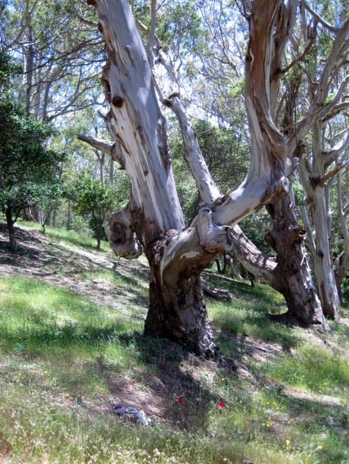 Papa's Tree
