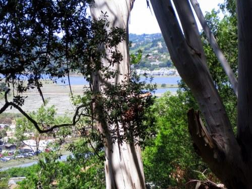 View from Fernwood hillside