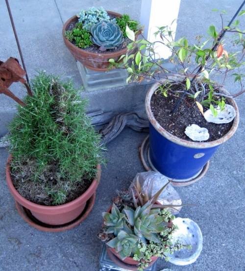 Pots in the Patio