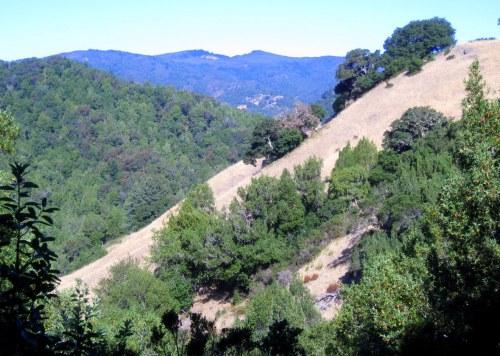 Dry Grassy Hillside