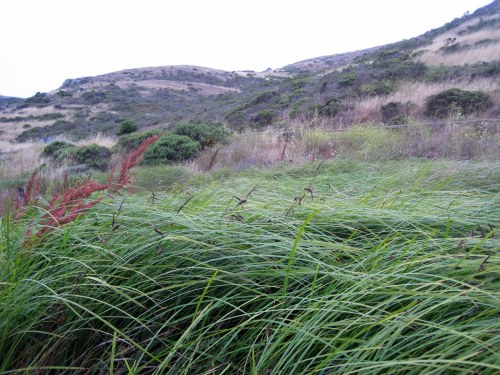 windswept grasses
