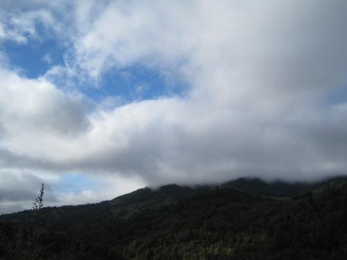 Fog over Tam