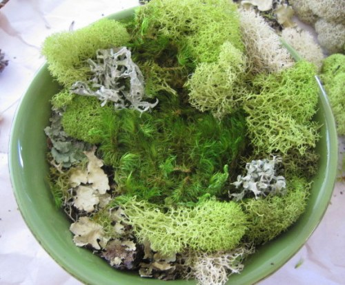Moss in bowl