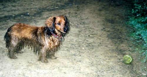Muddy Dawg
