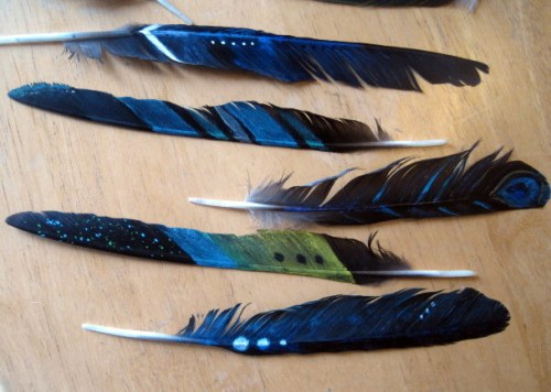 feather detail